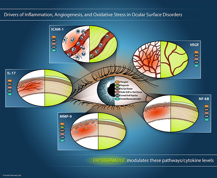 Dipyridamole's Mechanisms of Action and Targets in Ocular Surface Disorders